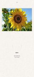 Rückwand zum Liturgischen Kalender - Sonnenblume